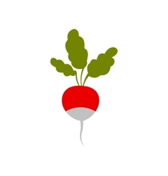 Radish icon in flat style vector