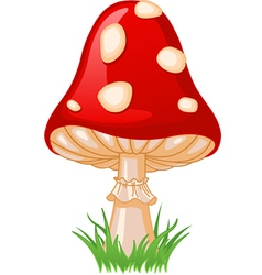 Of mushroom amanita in a grass vector