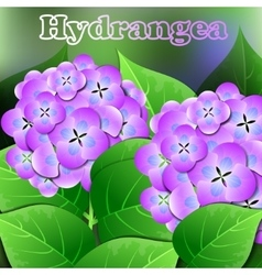 Beautiful spring flowers Hydrangea Cards or your vector image