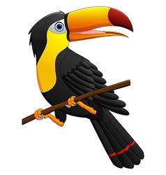 Cute toucan bird cartoon vector image