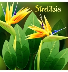 Beautiful spring flowers strelitzia reginae cards vector