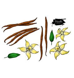 Vanilla flower and bean stick drawing set vector