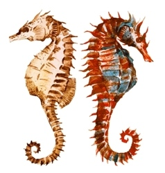 Watercolor seahorses vector image vector image