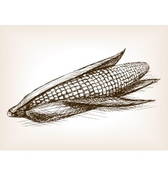 Ear of corn sketch style vector
