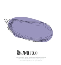 Hand drawn eggplant over white background vector