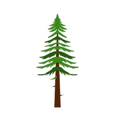Canadian fir icon flat style vector image vector image