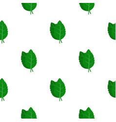 Fresh green basil leaves pattern flat vector