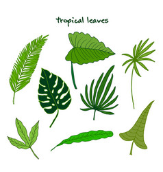 set of green tropical leaves vector image