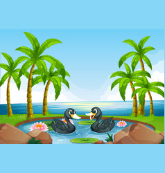 Two black ducks in pond vector