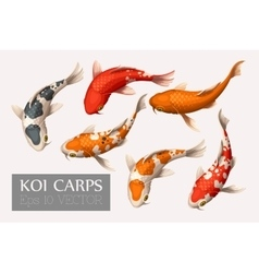 Set of koi carps vector