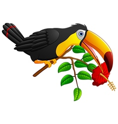 Funny toucan bird cartoon vector