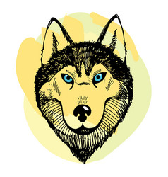 Hand draw husky portrait vector