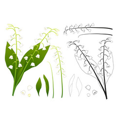 white lily of the valley outline vector image vector image