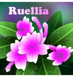Beautiful spring flowers purple ruellia cards or vector