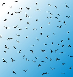 Birds gulls black silhouette on blue background vector image vector image