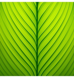 Texture of a green leaf vector image