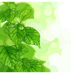 Plant with green leaves and dew vector