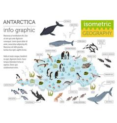 isometric 3d antarctica flora and fauna map vector image