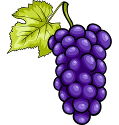 Blue grapes fruit cartoon vector