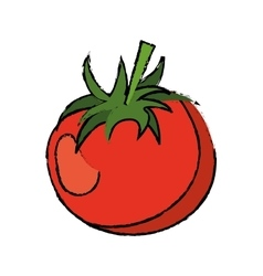 Drawing tomato juicy vegetable icon vector