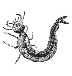 Water beetle larva vintage vector