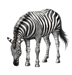 Zebra eating vector
