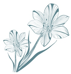 Vintage lily flower vector