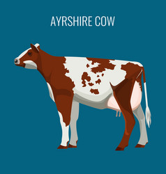 ayrshire cows isolated on white vector image vector image