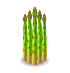 Fresh asparagus isolated on white vector