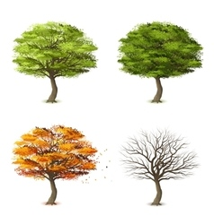 Trees in four seasons vector