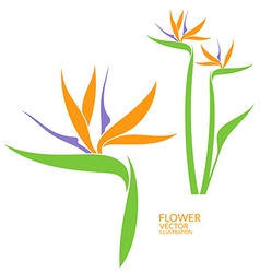 Bird of paradise tropical flower vector