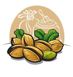 pistachios nuts vector image vector image