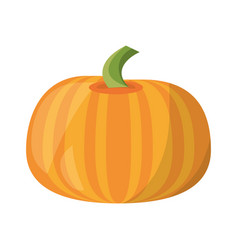 pumpkin vegetable natural vector image vector image