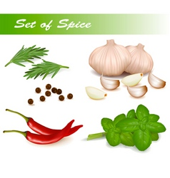 Set with spice vector