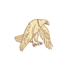bald eagle flying wings down drawing vector image vector image