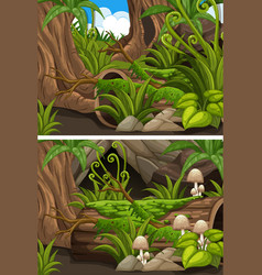 forest scenes with mushrooms and ferns vector image