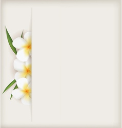 Plumeria background vector