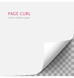 White paper with curled corner vector image vector image