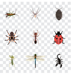 Realistic damselfly dor spider and other vector