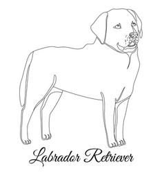 Labrador retriever dog outline vector