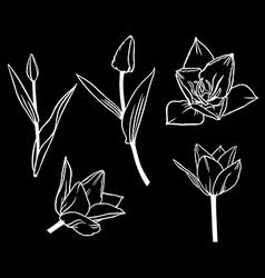 tulip contour set black vector image