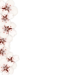 Sakura flowers floral banner for springtime vector