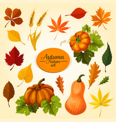 Autumn vegetable and fallen leaf icon set design vector
