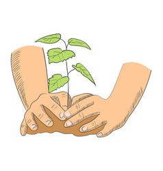 hands planting young tree vector image vector image