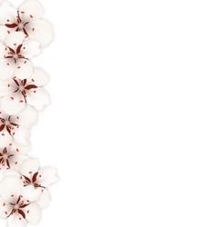 Sakura Flowers Floral Banner for Springtime vector image vector image