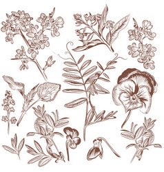 Set of hand drawn plants leafs and flowers vector