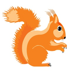 The squirrel vector