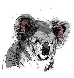 colored hand sketch head koala vector image