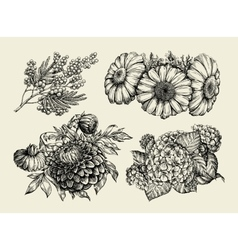 Flowers Hand drawn sketch of chamomile mimosa vector image