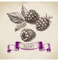 Raspberry blackberry hand drawn sketch berry vector
